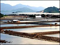 Shrimp farm ponds in Vietnam
