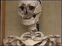 Pre-historic skeleton