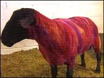 Owen the ram