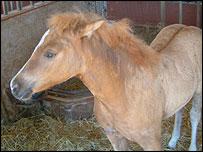 Esta semana se anunció nacimiento del primer caballo clonado