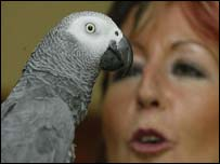 Matilda the African Grey