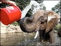Elephant is doused with water to keep it cool at zoo in Germany