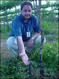 Agronomist Luis Bassoi with minisprinkler