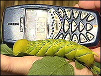 Caterpillar with mobile phone