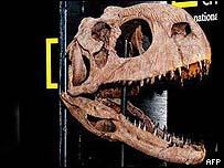 Modelo del cráneo del dinosaurio