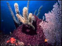 Corals   NOAA