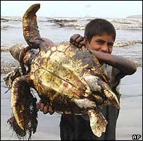 Boy holding a dead turtle on Karachi beech