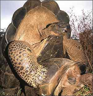 Tortoise, PNAS