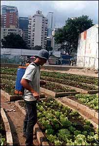 Urban garden in Caracas