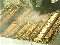 Smoke blankets a beehive
