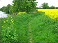Rape field and wild turnip   University of Reading