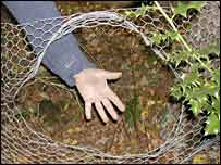 A hole in fencing probably made by a boar