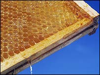 Hive frame full of honey, Simon Fraser (SPL)