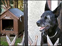 Adolf the dog with kennel