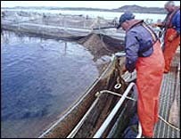 Image: Scottish Quality Salmon