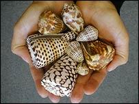 Cone snails, Callum Roberts