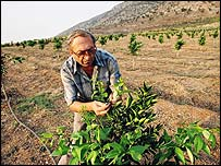 Lefter Rubie attending his citrus grove