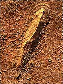 Fossil (Pic: University of South Australia)