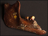 Piltdown Man jaw, BBC/Natural History Museum
