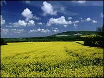 Oilseed rape crops