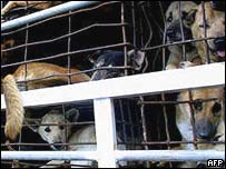 Dogs raised for meat in Vietnam