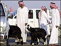 Saudis selling sheep
