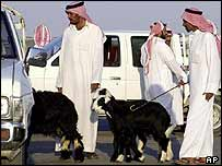 Saudis buy and sell sheep in Riyadh, Saudi Arabia