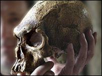 Cohuna skull, Natural History Museum