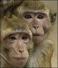 Primate, RDS/Wellcome Trust photo