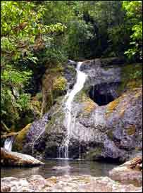 Warbler's forest home   BirdLife Fiji