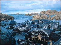 Oiled beach   WWF-Canon/Raul Garcia