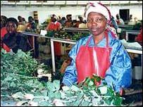 Flower farm worker