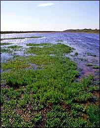 Saltmarsh   Peter Wakely/English Nature