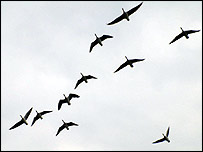10 geese