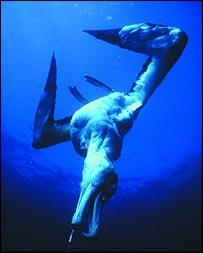 Albatross, Birdlife