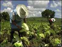 Campesinos de Brasil