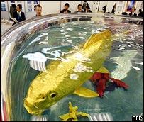 Fish, AFP