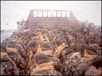 Soldados brit�nicos en el Atl�ntico Sur durante la guerra de las Falklands o Malvinas.