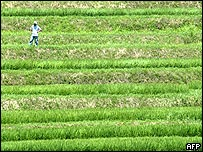 A farmer looks at his terraced paddy field in Asuka, central Japan