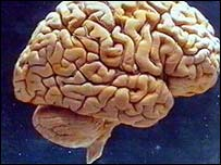 Brain
