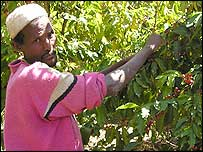 Hyder Hassan, coffee farmer