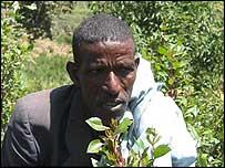 Ethiopian khat farmer
