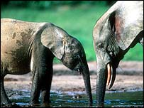 Elephant parent and calf   WWF-Canon/Martin Harvey