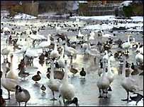 Birds at Slimbridge Wildfowl and Wetlands Trust