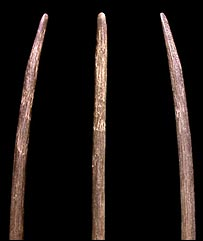 Different views of a spear foreshaft, Pitulko