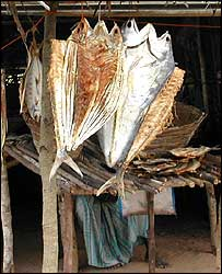 Dried fish stall