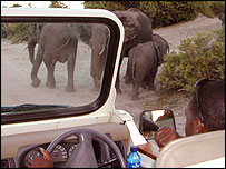 Elephants viewed from a Safari jeep in Kasane, Botswana