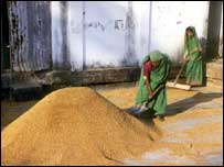 Women shovelling grain in Bangladesh