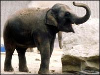 Elefante del zoológico de Londres