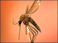 உலக சுகாதார ஸ்தாபனம் (WHO) 30 வருடங்களின் பின்னர் மீண்டும் மலேரியாக் காவி நுளம்புகளை அழிக்க உள்ளகத் தேவைகளுக்கு டிடிரி (DDT)யைப் பாவிக்க அனுமதித்துள்ளது